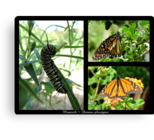 Butterfly Collage ~ Monarch Canvas Print