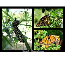 Butterfly Collage ~ Monarch Photographic Print