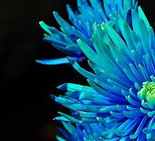 Blue flower by Rey Albert