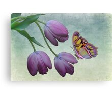 Butterfly Beauty Canvas Print