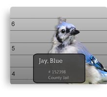 Another Jail Bird Canvas Print