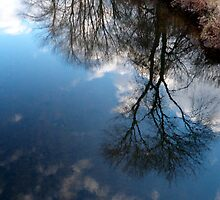 Reflection by elh52