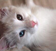 Daisy White Cat by Drakael