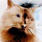 kat kitty by elh52
