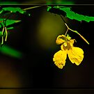 Yellow Jewelweed by Phillip M. Burrow