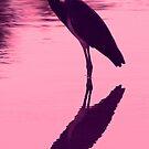 Tri- colored(louisiana)heron in silhouette by jozi1