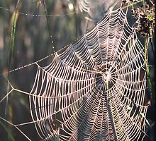 Early Morning Web by David Davies
