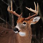 Ten-Point Buck by Bill McMullen