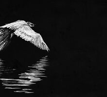 egret  by clarehenry