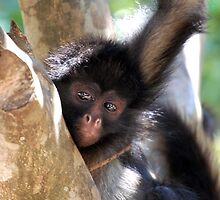 monkey troubles. by Amanda Huggins