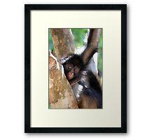 monkey troubles. Framed Print