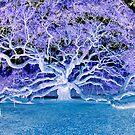 The angel (devil?) Oak- A Live (dead?) Oak Tree by Kent Burton
