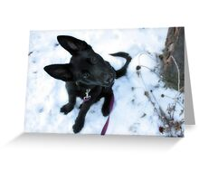 Etta in the Snow Greeting Card