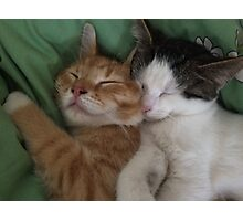 Cuddling kitties Photographic Print