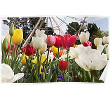 Flowers at Floriade Poster