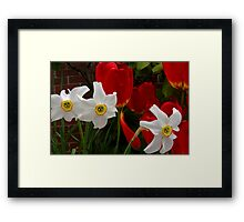 jonquil third wheel Framed Print