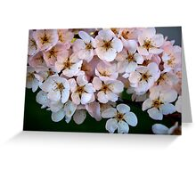 under the branch Greeting Card