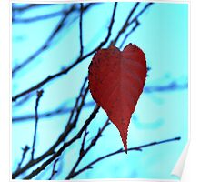 red leaf heart  Poster