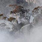 Misty Morning, Mt Buffalo by Harry Oldmeadow