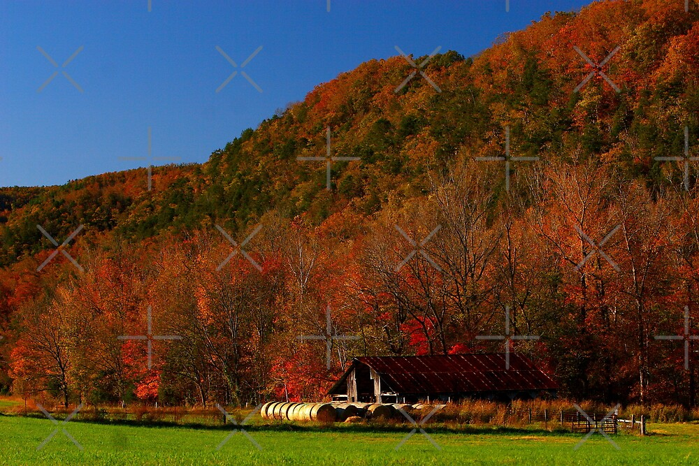 Arkansas Barn, Upstaged by Nature's Glory by Lisa G. Putman