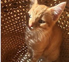 Cat in a basket by marypilkinton