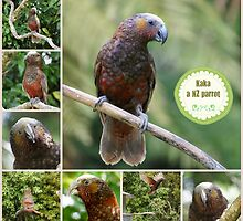 Kaka, a New Zealand Parrot by Brenda Anderson