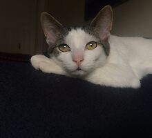 Those eyes by marypilkinton