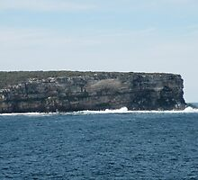 North Head, Sydney Harbour by Trish Meyer