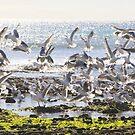 Birds. by Eunice Atkins