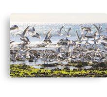 Birds. Canvas Print