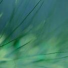 Grasland by Lena Weiss