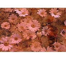 """Rustic Daisy Delight ..."" Photographic Print"