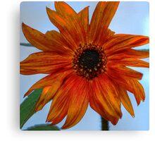 Orange Sunflower Canvas Print