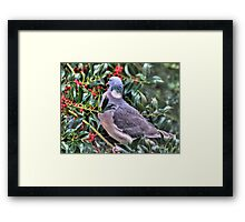Holly Pigeon Framed Print