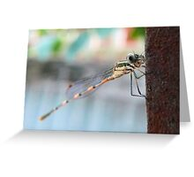 My what big eyes you have Greeting Card