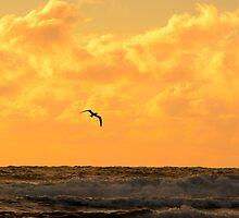 Australia Sunset by Dennis  Wat