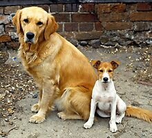 Good pals. by David A. L. Davies