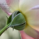 From the heart by Celeste Mookherjee