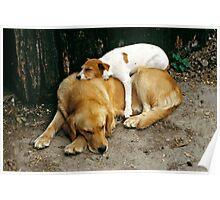 Sleeping dogs, UK, 1980's. Poster