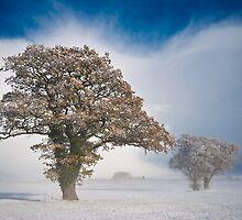 Winterscape by marc melander