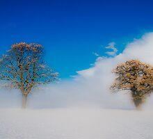 Snowstorm  by marc melander