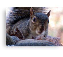 Nosy Squirrel Canvas Print