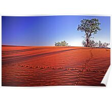 Animal tracks and red sand, Windorah, western Queensland Poster