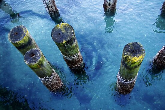 lichen pilings by dedmanshootn