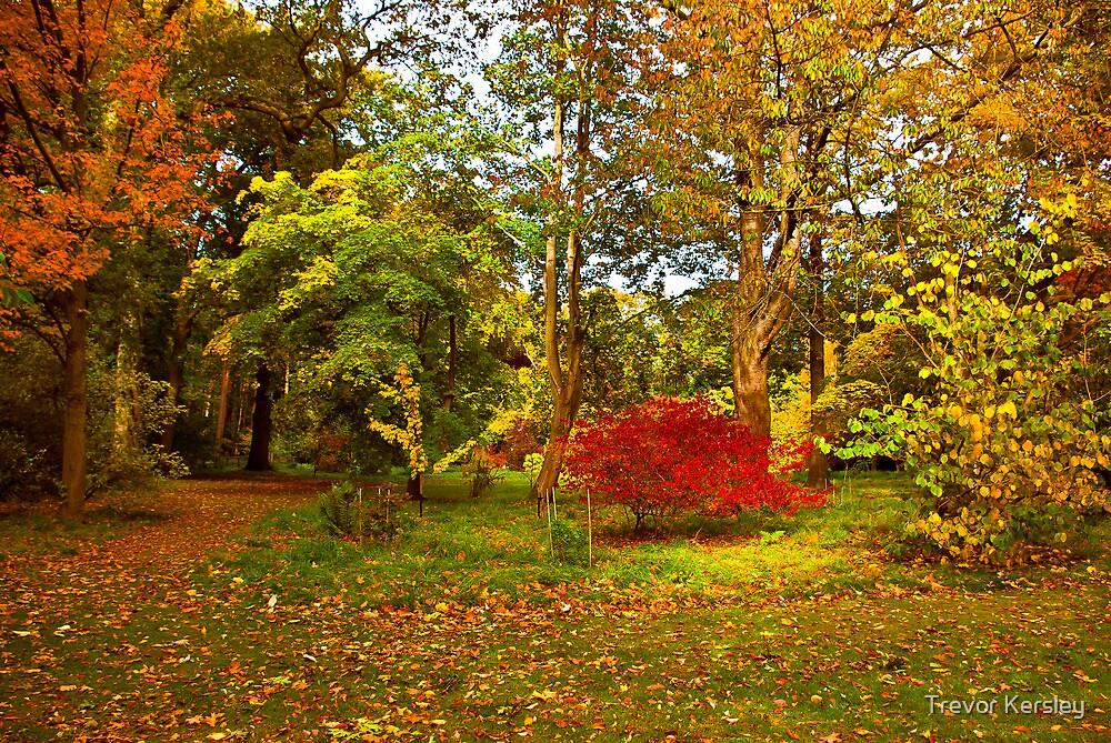Autumn Colours by Trevor Kersley
