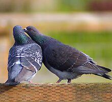 just gimme a little kiss by dedmanshootn