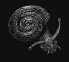 Fibonacci's Snail by FrogFaithMedia