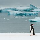 Gentoo on Ice by Craig Goldsmith