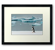 Gentoo on Ice Framed Print