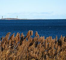 Thacher Island And The Bulrushes ~ Autumn Dance by artwhiz47
